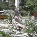 Спил деревьев в Детском саду №300